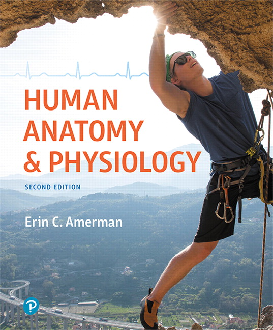 Test Bank For Human Anatomy & Physiology, 2nd Edition By Erin C. Amerman,ISBN-13: 9780134771069